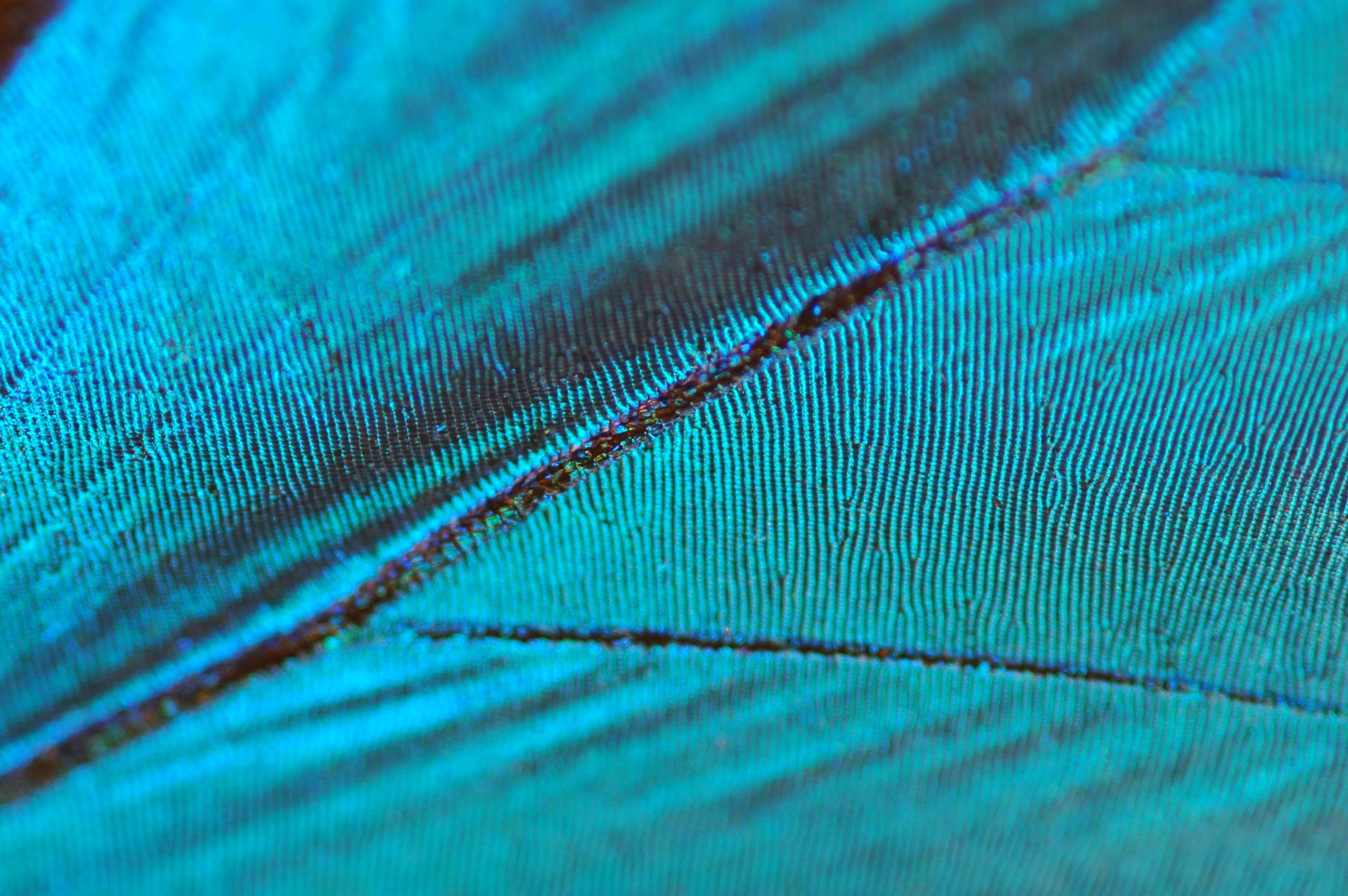Scientific Image Blue Morpho Butterfly Wing Nise Network