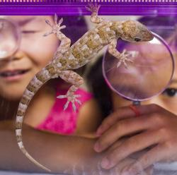 Children looking at Gecko with magnifying glass