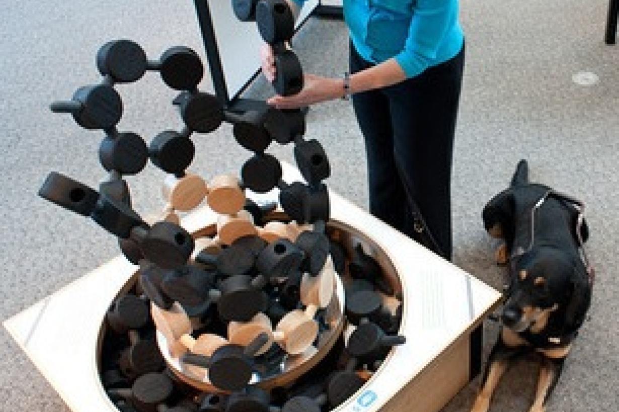 visitor using exhibit