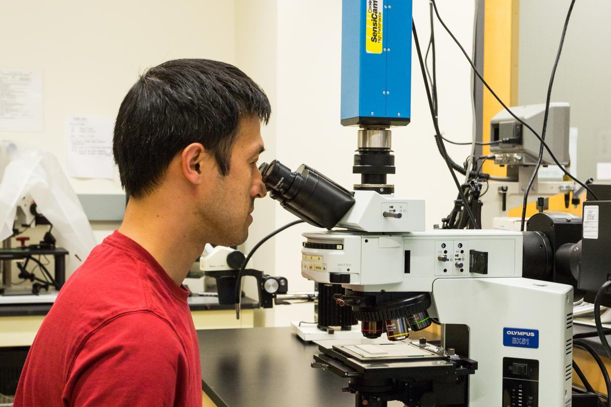 Scientist using a Light Microscope
