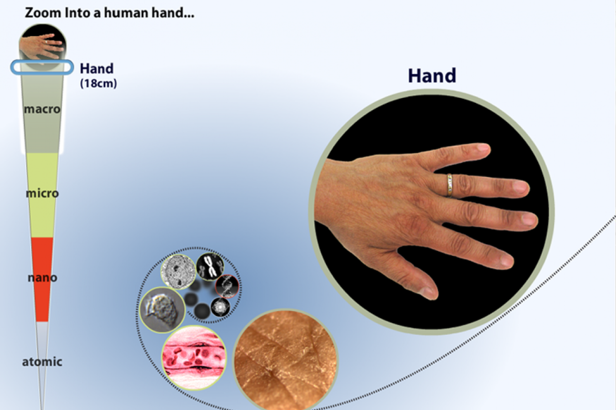 A screenshot of the zoom into a human hand interactive starting with a hand.