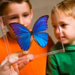 Exploring Structures - Butterfly activity - two children looking at Blue Morpho butterfly